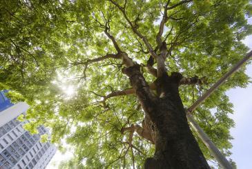 Bảo vệ môi trường xanh - Hành động ngay hôm nay